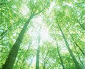 大地の光のシャワーヒーリング